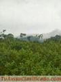 ganga-27-hectareas-2-200-000-cada-una-3.jpg