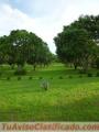 Propiedad  de 11380 m² en Ceiba de Orotina